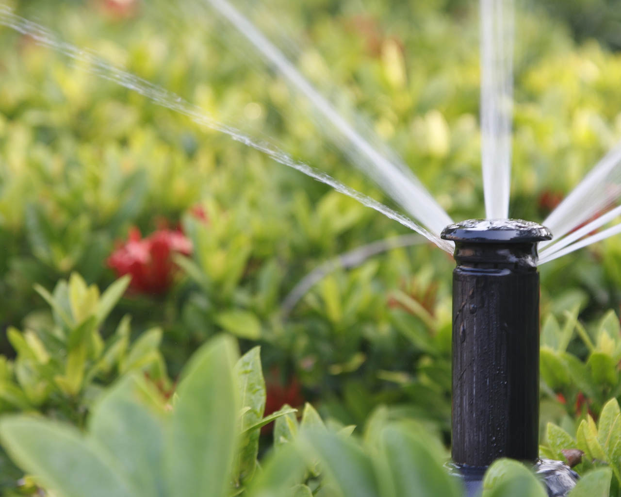 Irrigation two